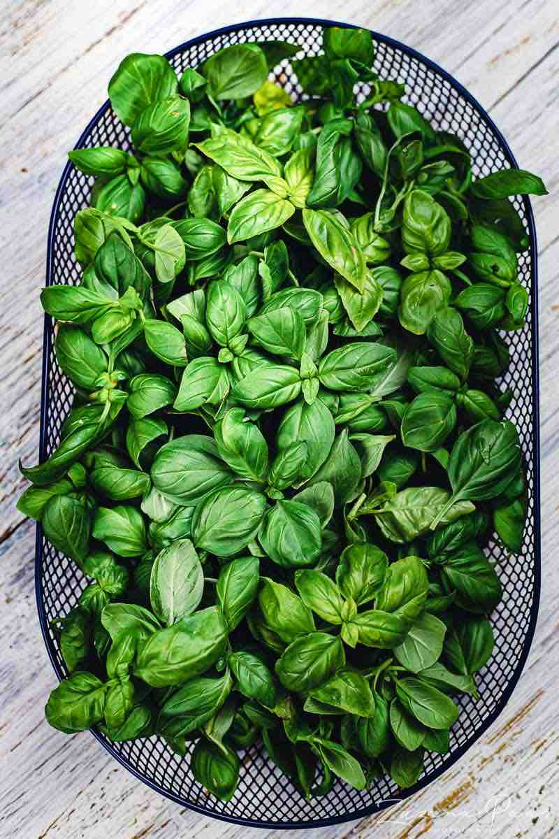 Pesto Recipe with freshly picked Basil leaves in a basket